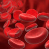 Anticoagulantes|¿Que son?