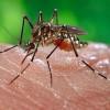Fiebre Amarilla: vacunación y riesgos