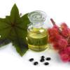 Ricinus communis para la homeopatia