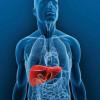 Alternativa para trasplantes: 'yemas' de hígado
