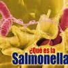 Salmonelosis o Salmonella