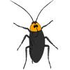 Cucarachas | sus cerebros podrían tener propiedades antibióticas