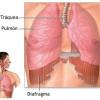 Qué es el diafragma | Anatomía, importancia y funciones