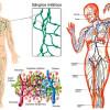 Drenaje linfático manual: Técnica, efectos, indicaciones y contraindicaciones