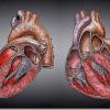Fibrilación auricular | Encuentran un gen que ocasiona esta arritmia