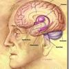 Encogimiento del cerebro