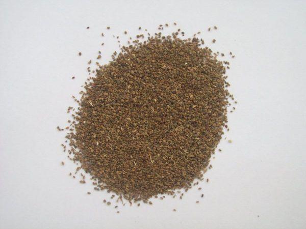 230-plantas-medicinales-mas-efectivas-y-sus-usos-apio-semillas