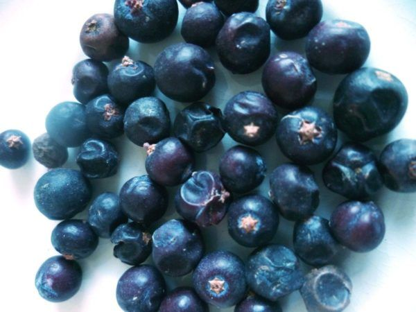 230-plantas-medicinales-mas-efectivas-y-sus-usos-enegro-bayas-negras
