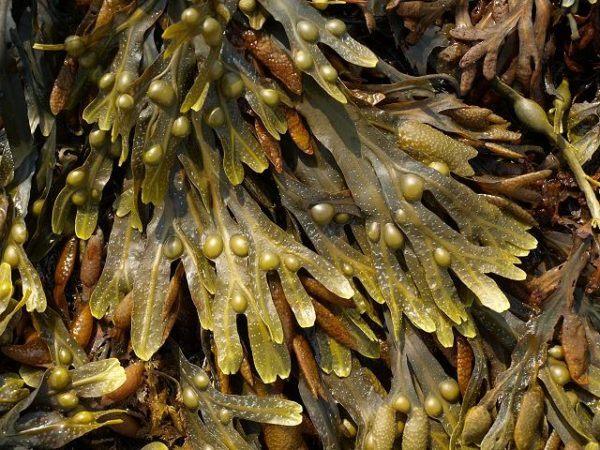 230-plantas-medicinales-mas-efectivas-y-sus-usos-fucus