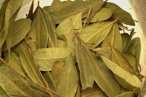 230-plantas-medicinales-mas-efectivas-y-sus-usos-laurel-hojas