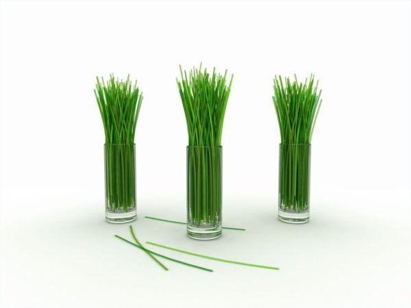 230-plantas-medicinales-mas-efectivas-y-sus-usos-lemon-grass