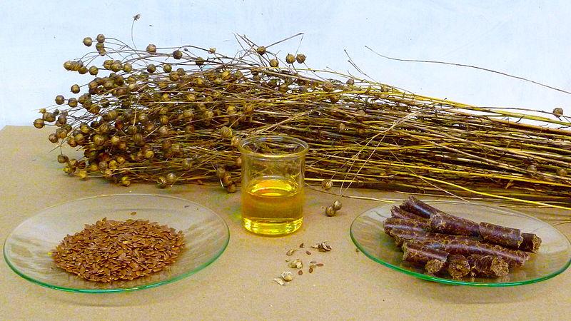 230-plantas-medicinales-mas-efectivas-y-sus-usos-lino-amarillo-semillas