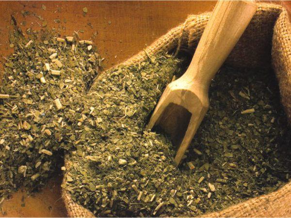 230-plantas-medicinales-mas-efectivas-y-sus-usos-mate-hierba