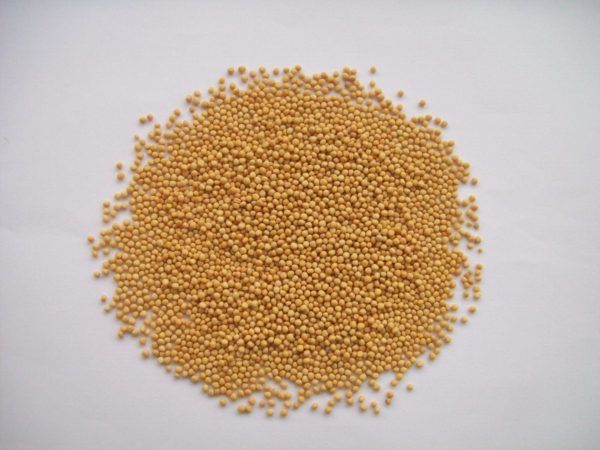 230-plantas-medicinales-mas-efectivas-y-sus-usos-mostaza-amarilla-grano