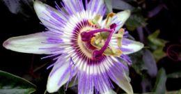 Las mejores plantas medicinales efectivas y para que sirven