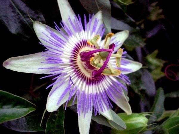 Plantas Medicinales Usos Parte 2 Salud Y Bienestar En Taringa