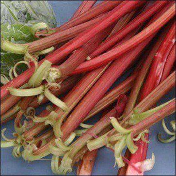 230-plantas-medicinales-mas-efectivas-y-sus-usos-ruibarbo-raiz