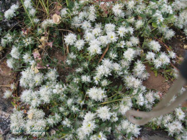 plantas medicinales usos parte 2 - Taringa!
