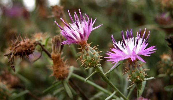 230-plantas-medicinales-mas-efectivas-y-sus-usos-travalera-planta