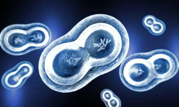 Causas del lupus cromosomas