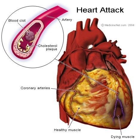 Curiosidades del cuerpo humano | Organos internos - Demedicina.com