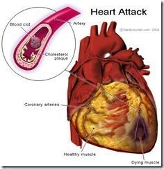 Curiosidades del cuerpo humano Organos internos2