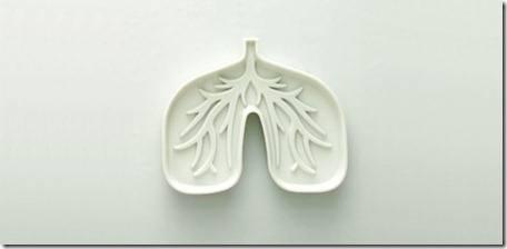 Curiosidades del cuerpo humano Organos internos