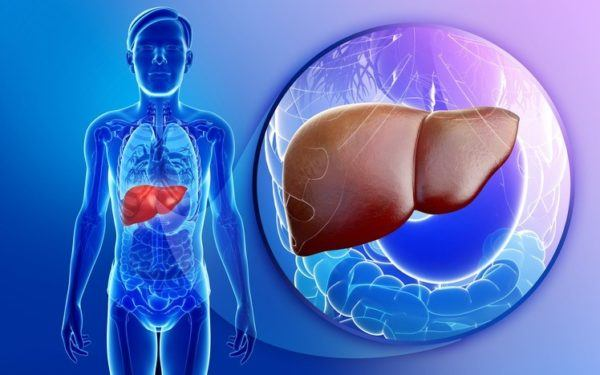 Higado graso transaminasas mal funcionamiento