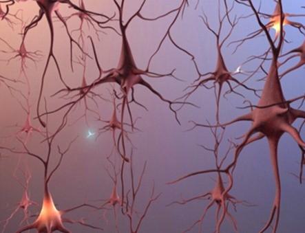 Neurogenesis2345