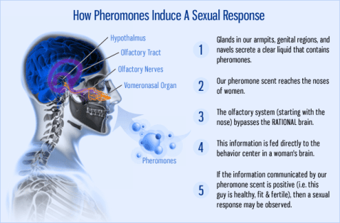 Pheromone-Cologne-For-Men-3