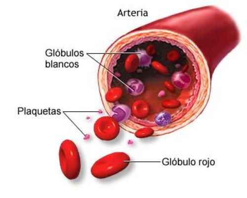 Causas-de-plaquetas-bajas