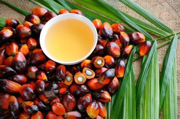 Que grasas debemos evitar aceite de palma