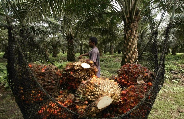 ¿Es verdad que el aceite de palma podría causar cáncer?