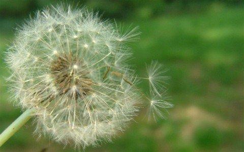 alergias-su-relacion-con-la-primavera-polen