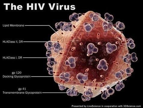 Molécula que propaga el VIH| Descubrimiento científicos españoles