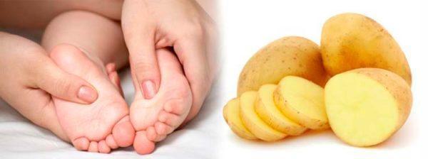 alimentos que no se deben consumir para el acido urico como curar la enfermedad gota el pulpo tiene acido urico