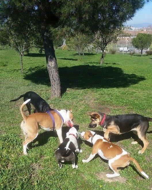 bajar-peso-sin-utilizar-pasear-perro