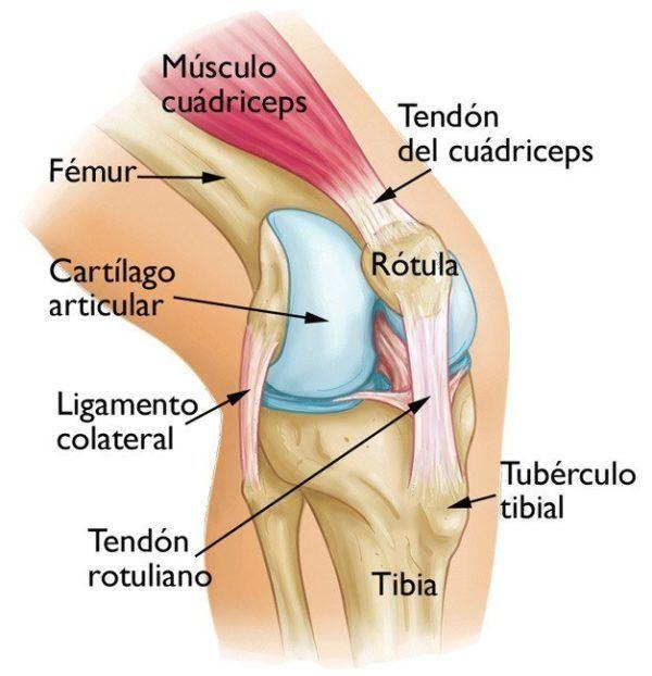 Bursitis de Rodilla: qué es, causas, diagnóstico y tratamiento ...