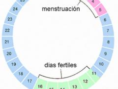 Calendario ovulación embarazo