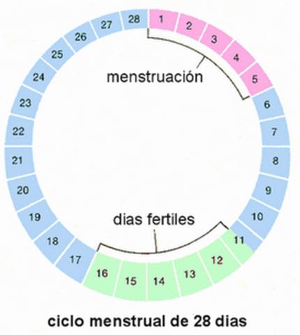 calendario ovulacion embarazo