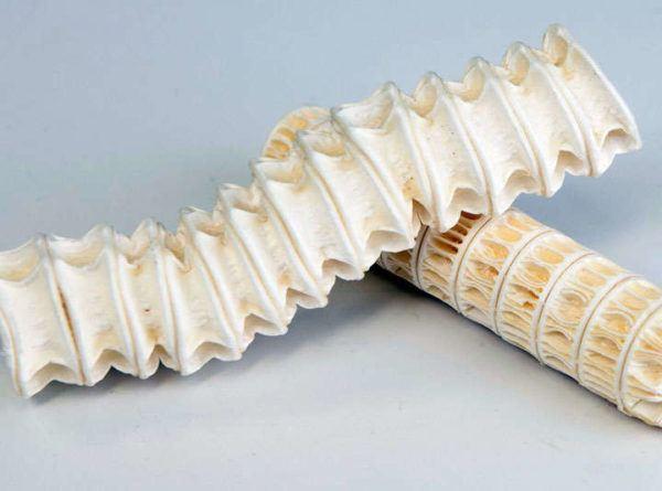 cartilago-de-tiburon-propiedades-y-beneficios-para-nuestros-huesos-y-articulaciones-natural