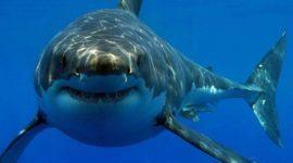 Cartílago de tiburón: propiedades, beneficios y contraindicaciones