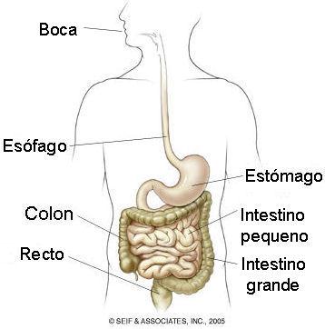 causas-y-tratamiento-de-la-sangre-en-las-heces-tubo-digestivo
