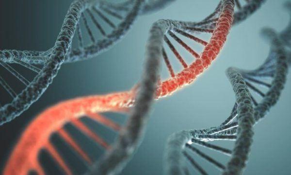 Clasificacion de la dislipemia genetico o hereditario