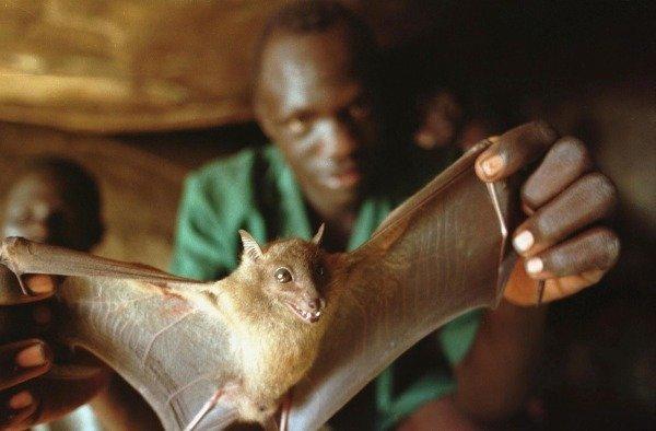 como-se-transmite-el-ebola-toda-la-informacion-muercielago-foco-del-virus