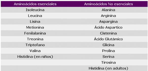 Aminoácidos esenciales y no esenciales - Demedicina.com