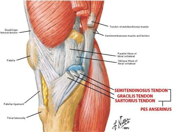Dolor de rodilla c mo saber si es una lesi n de menisco o no - Dolor en la parte interior de la rodilla ...