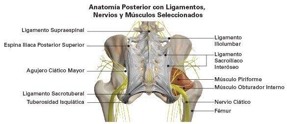 Dolor sacro iliaco o sacroileítis: Causas y tratamiento - Demedicina.com