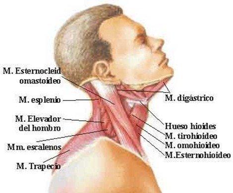Que hacer si bolyat los músculos de la espalda al embarazo