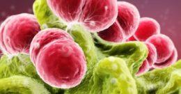 Erisipela: síntomas y tratamiento